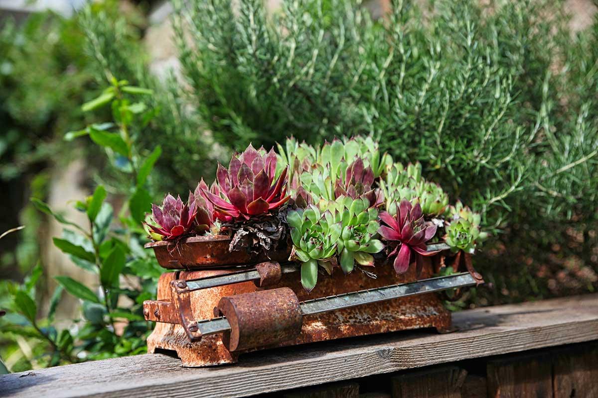 Hilfe bei der Pflege des barrierefreien Gartens