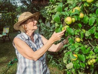 Barrierefreier Garten mit Nutzpflanzen zum Ernten